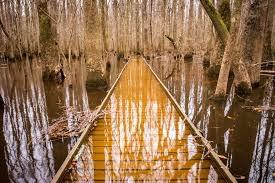 Congaree National Park, South Carolina.
